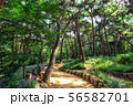 achasan ecological park 56582701
