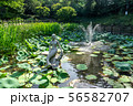 achasan ecological park pond 56582707