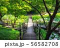 achasan ecological park pond 56582708