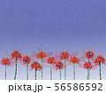 彼岸花と夜空 56586592