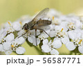 Macro photo of insect. Black fly on summer meadow. 56587771