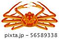 ズワイガニ 56589338