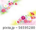 コスモスのイラスト 56595280