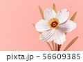 Conceptual Flower Narcissus On Pink Background 56609385