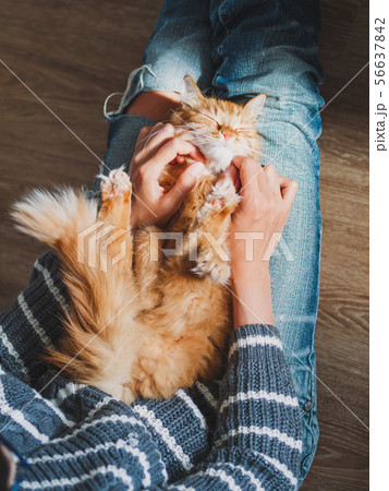 Cute ginger cat dozing on woman knees.  56637842
