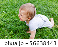 Little baby crawling on grass. Kid is laughing. 56638443