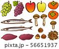 秋の味覚 イラスト 56651937