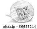 Drawing of a cat wearing a Elizabethan collar 56655214