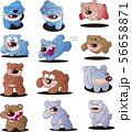 怒れる熊のイラスト集 56658871