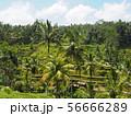 バリ島 ウブドの観光地 テガラランライステラス 棚田 56666289