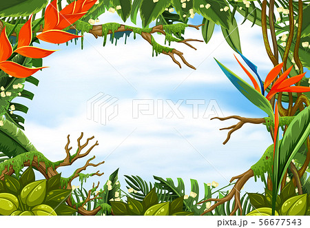 Border template with tropical rainforest 56677543