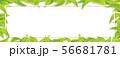 グリーン-葉っぱ-リーフ-フレーム-新緑-png-透過 56681781