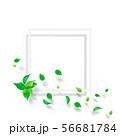 新緑-葉-白いフレーム-png-透過 56681784