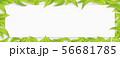 グリーン-葉っぱ-リーフ-ホワイトボード-新緑-白木 56681785