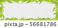 グリーン-葉っぱ-リーフ-フレーム-新緑-白木 56681786