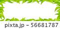グリーン-葉っぱ-リーフ-フレーム-新緑-png-透過 56681787