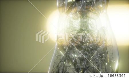 X-Ray Image Of Human Body 56683565