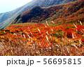 那須山紅葉の日の出平 56695815