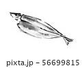 焼きさんま、秋刀魚、さんま、サンマ、魚、秋、秋食材、旬、さかな、青魚、イラスト、墨絵、和風、筆書き、 56699815