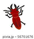 ヒラズゲンセイ 赤いクワガタ 危険生物 56701676