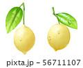 レモン 56711107