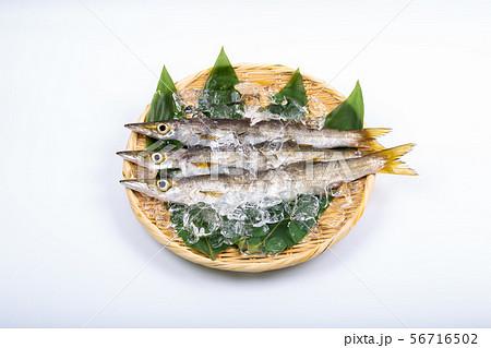 カマス 魚 56716502
