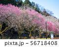 高尾梅郷遊歩道 駒木野公園 (東京都八王子市) 2019年3月 56718408