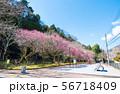 高尾梅郷遊歩道 駒木野公園 (東京都八王子市) 2019年3月 56718409