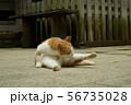 猫 56735028