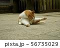 猫 56735029