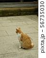 猫 56735030