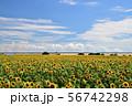 真夏の風景 ひまわり 56742298