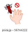 ヒラズゲンセイ 赤いクワガタ 有毒 触ると危険 手がかぶれる 56744222