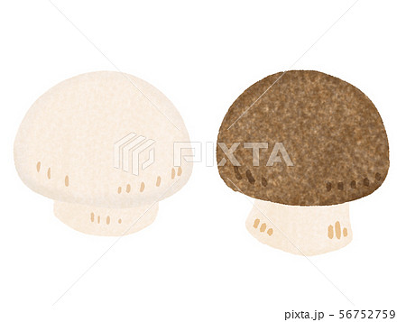 マッシュルーム mushroom 56752759
