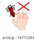 ヒラズゲンセイ 赤いクワガタ 有毒 触ると危険 手がかぶれる ×マーク 禁止マーク 56771384