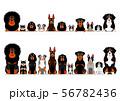 オレンジ眉の犬のボーダー セット 56782436