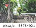 石の階段と新緑の公園 56784921