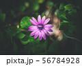 暗闇に咲く花 56784928