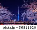 東京スカイツリーと夜桜 56811920