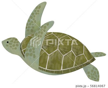 手描き 海素材 ウミガメ 56814067