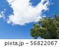 青空 56822067