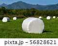 Haystack packed in white pulp packaging on field 56828621