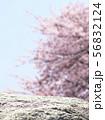 石-桜-背景素材-合成素材 56832124