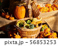 Fresh pumpkins on farm market still life 56853253