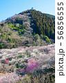 高尾梅郷梅まつり 木下沢梅林と熊笹山 (東京都八王子市) 2019年3月 56856555