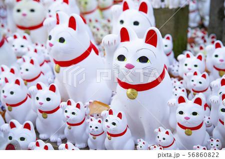 豪徳寺の招き猫 56860822