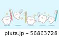 cute cartoon tooth playing 56863728