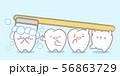 brushing cute cartoon teeth 56863729