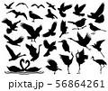 鳥のアイコンセット 56864261