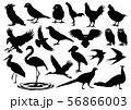 鳥のアイコン2 56866003